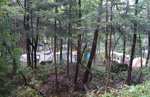 スカウト第3隊の森