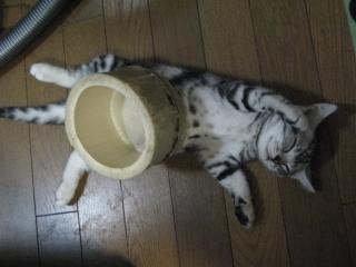 竹容器をのせて