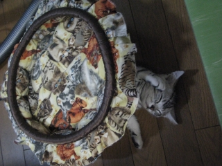 猫ベッドのせて