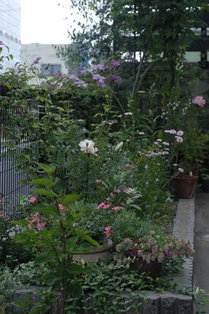 fence2008609-1.jpg