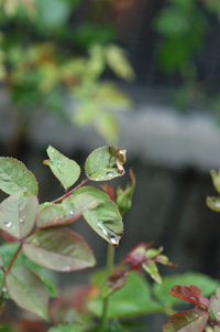 okurahoma2008528-2.jpg