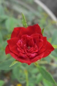 redc2008813.jpg