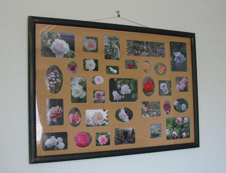 rosephoto2008spring1.jpg