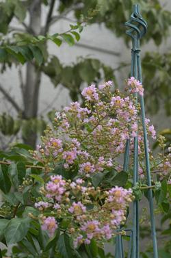 sarusuberi2008722-1.jpg