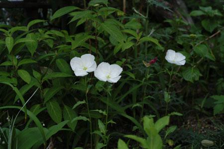 tsukimisou2008517-2.jpg