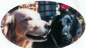 blog 2003年年賀状