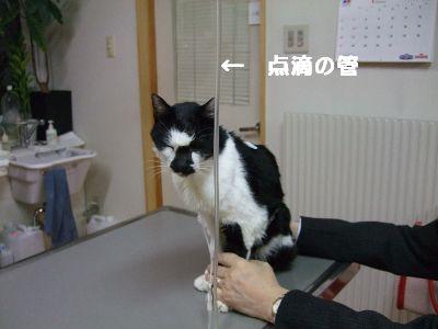 20080118sasuke.jpg