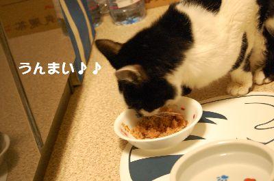 20080120sasuke4.jpg