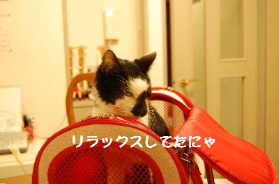 20080121sasuke4.jpg