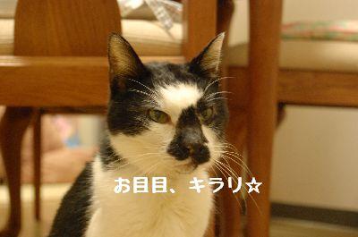 20080121sasuke6.jpg