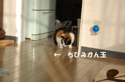 20080125mikan7.jpg