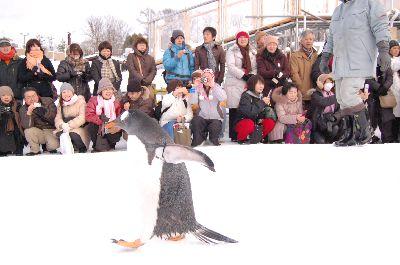 20080218asahiyama5.jpg