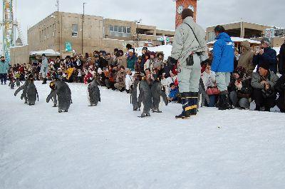 20080218asahiyama7.jpg