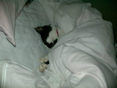 眠る王子さまニャ