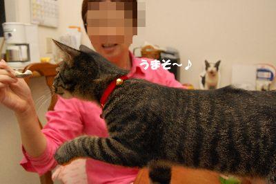 20080925kotetsu2.jpg