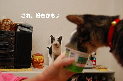 20080925kotetsu4.jpg