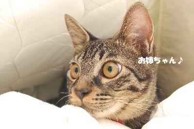20081003kotetsu4.jpg