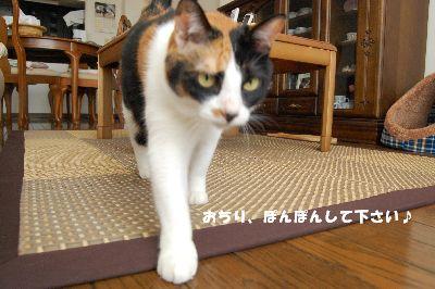 20081003mikan2.jpg