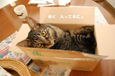 20081010kotetsu5.jpg