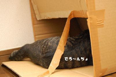 20081012kotetsu.jpg