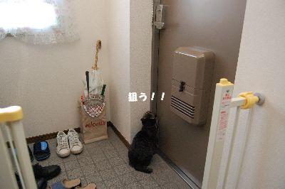20081018kotetsu.jpg
