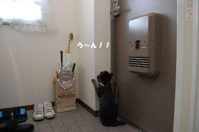 20081018kotetsu3.jpg