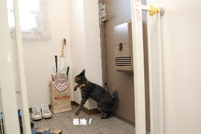 20081018kotetsu7.jpg