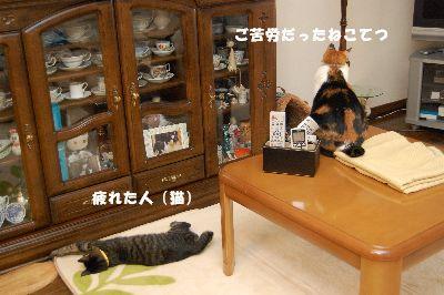 20081018mikankotetsu.jpg