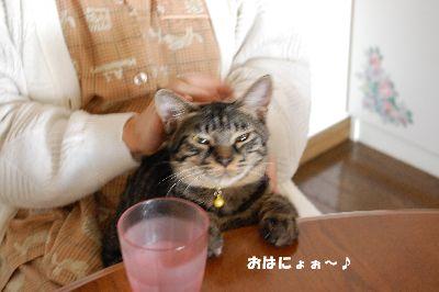 20081102kotetsu.jpg