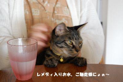 20081102kotetsu4.jpg