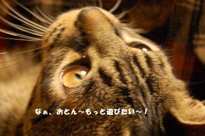 20081102kotetsu5.jpg