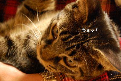 20081102kotetsu6.jpg