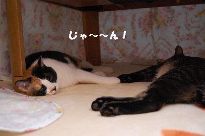 20081108mikankotetsu.jpg