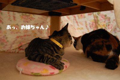 20081110mikankotetsu.jpg
