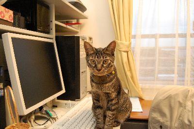 20081112kotetsu.jpg