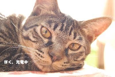 20081114kotetsu.jpg