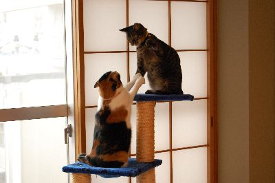 20081114mikankotetsu3.jpg