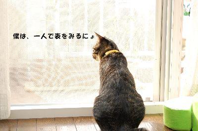 20081118kotetsu.jpg