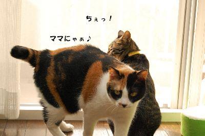 20081118mikankotetsu.jpg