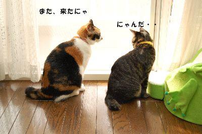20081118mikankotetsu2.jpg