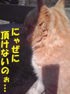 明日香猫?