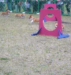 アスリート犬2