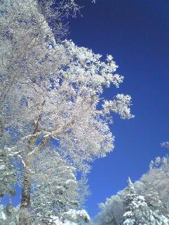 正月スキーin志賀高原