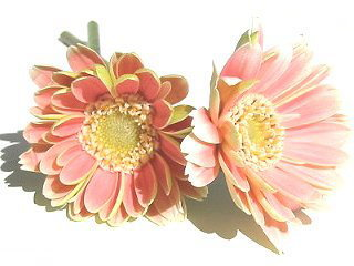 flower48_b.jpg