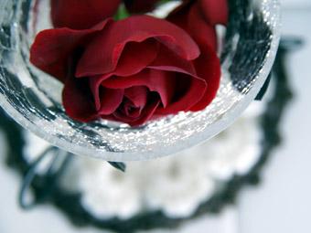 rose02_20090322134109.jpg