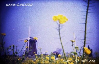 菜の花と風車小屋