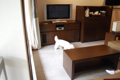 DSC_room.jpg