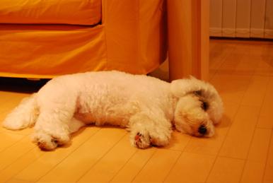 DSC_tired.jpg