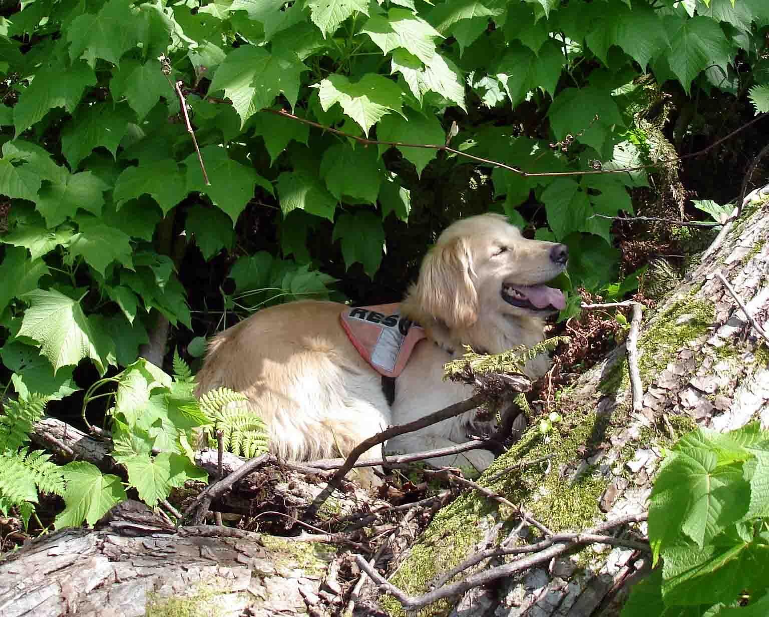 平場上部の倒木付近にて休む