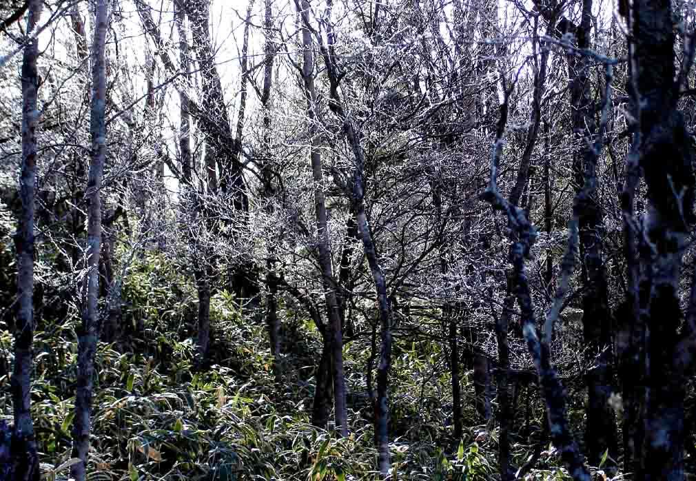 山伏への道(霧氷)
